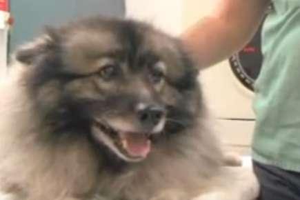 Battling Canine Cancer