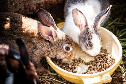 Food and Housing for Rabbits