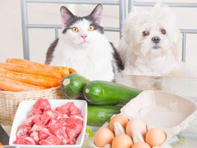 Cooking for Your Pets