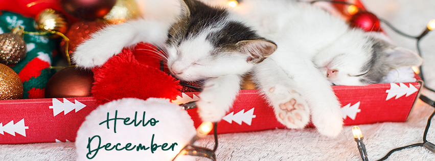Pet December Newsletter