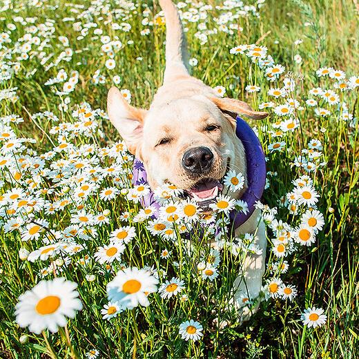 Dog spring time