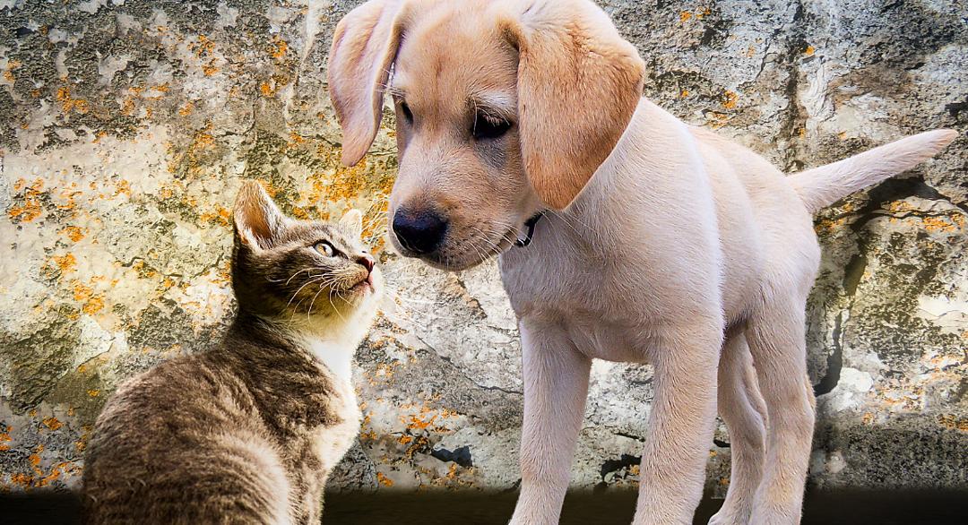 Pet Awareness Month 🐶