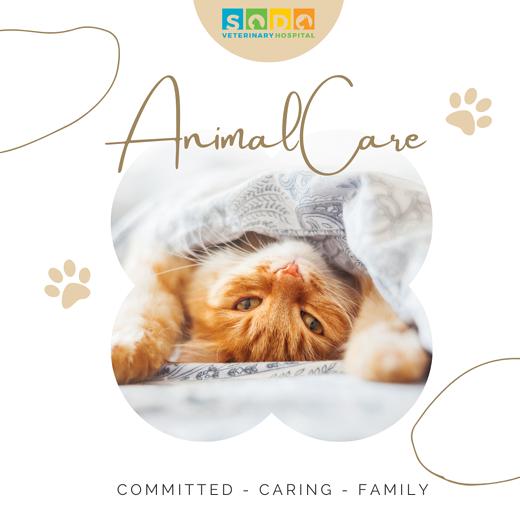animal-care-sodo-vet