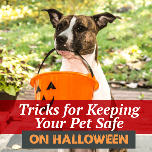 holiday pet safety sodo vet